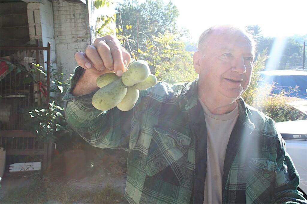 Sam Consylman holding a bundle of pawpaws.