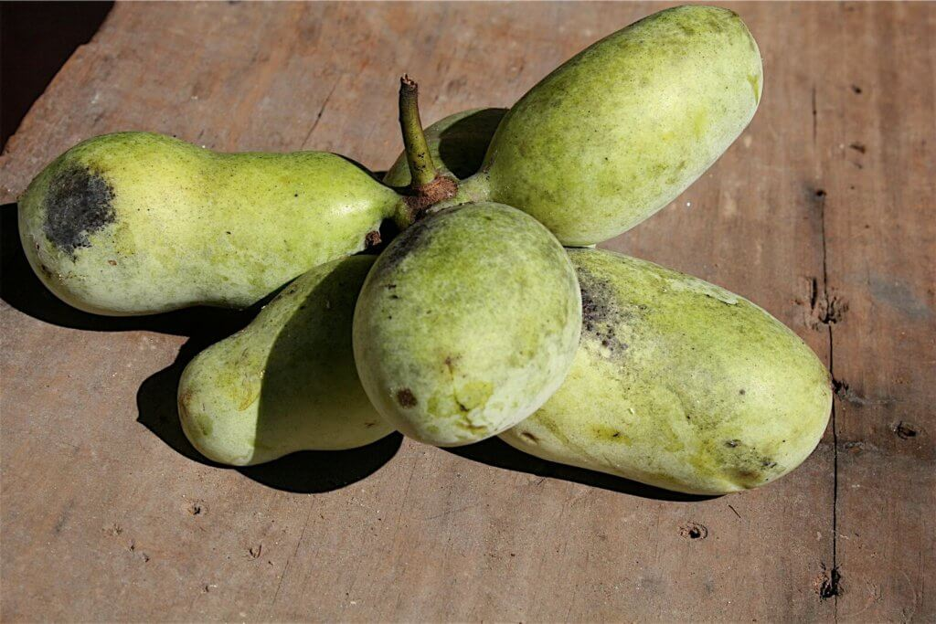 A bundle of pawpaws on a table.