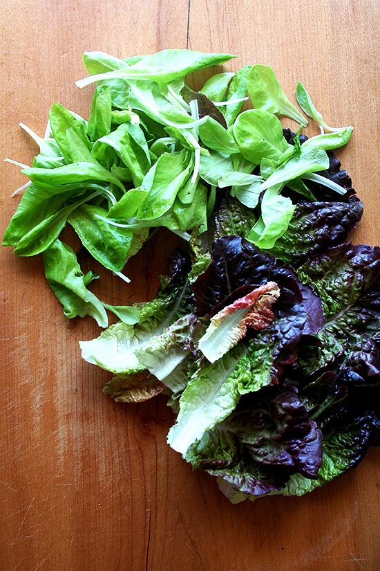 lettuce from Morning Song Farm CSA