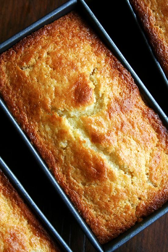 orange-ricotta loaves, just baked