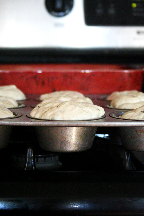 Thyme dinner roll in muffin tins rising.