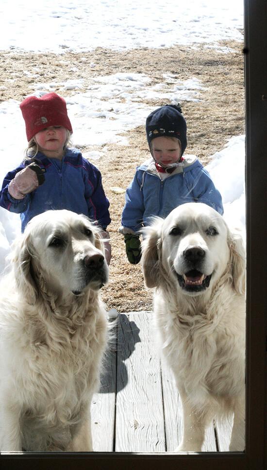 kids, dogs
