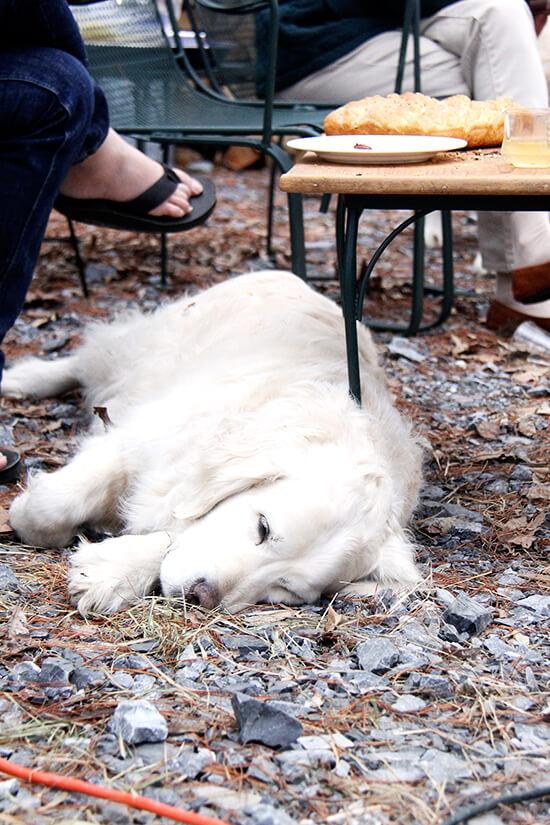 sleeping doggy