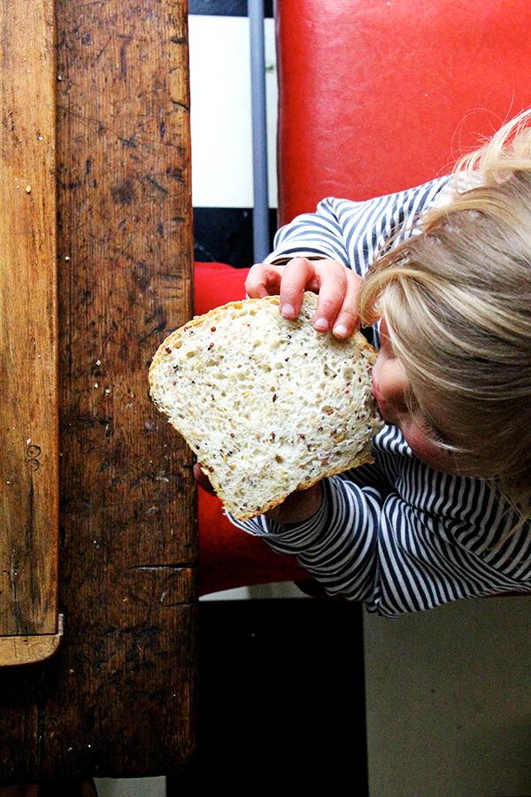 wren eating quinoa-flax bread