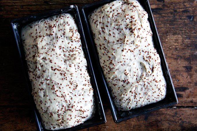 quinoa-flax dough risen in loaf pans.