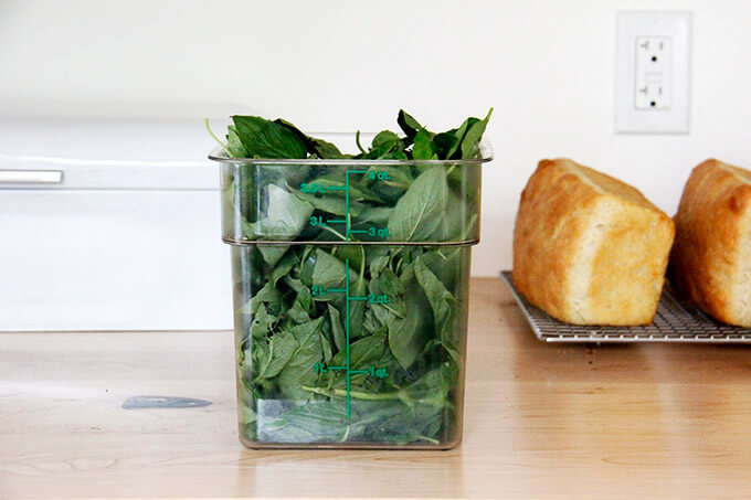 A 4-quart container filled with basil leaves.