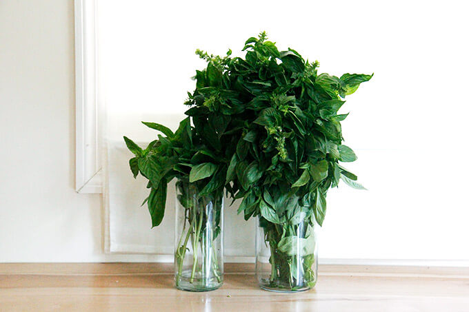 basil on the counter in jars of water.