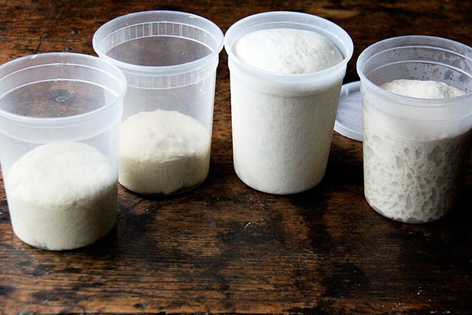 Homemade pizza dough in quart containers.