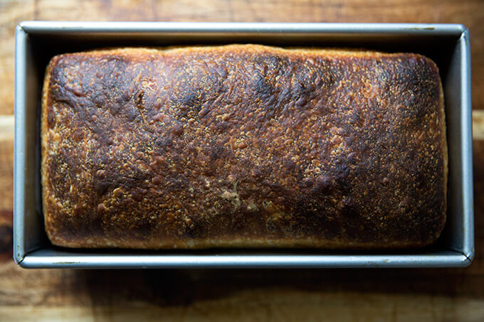 Sourdough sandwich bread, just baked, still cooling in loaf pan.