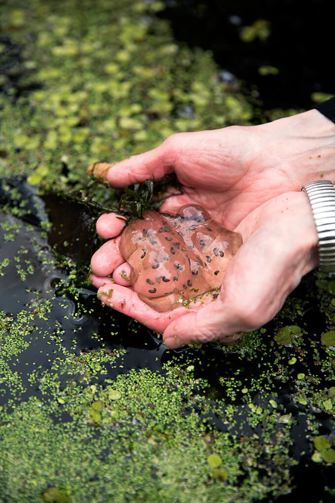 Margaret Roach holds salamander eggs.