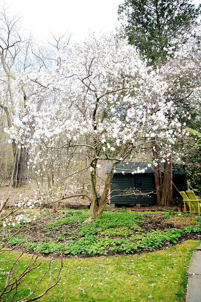 A blooming tree in Margaret Roach's garden.