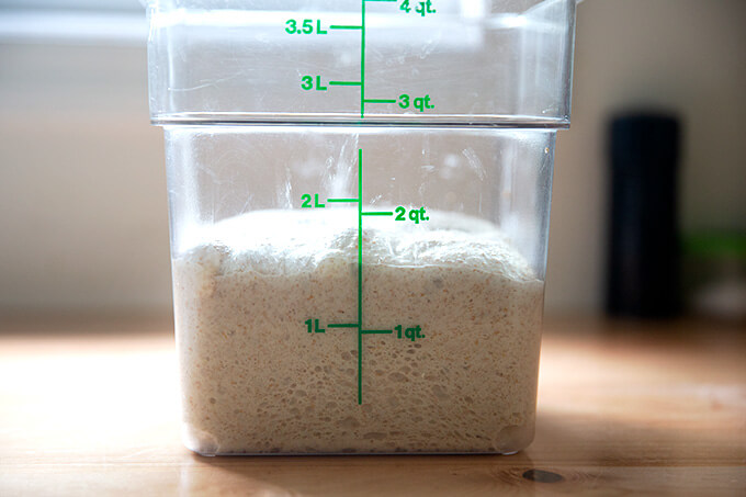 A container of sourdough that has risen by 50% in volume.