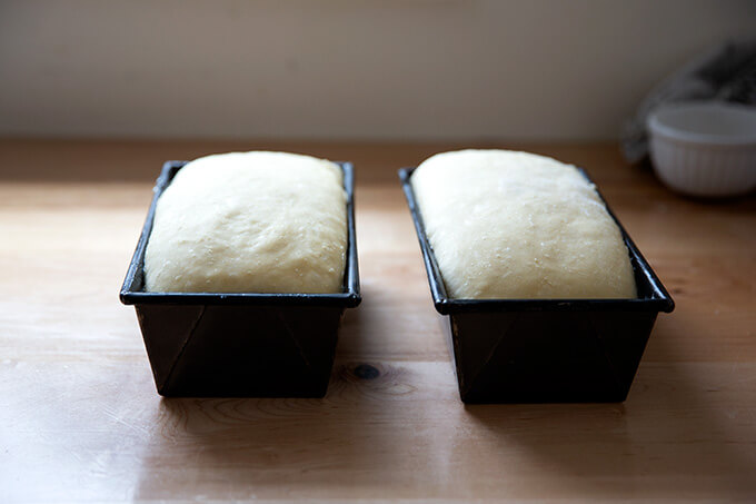 Two loaf pans filled with brioche dough ready for the oven.